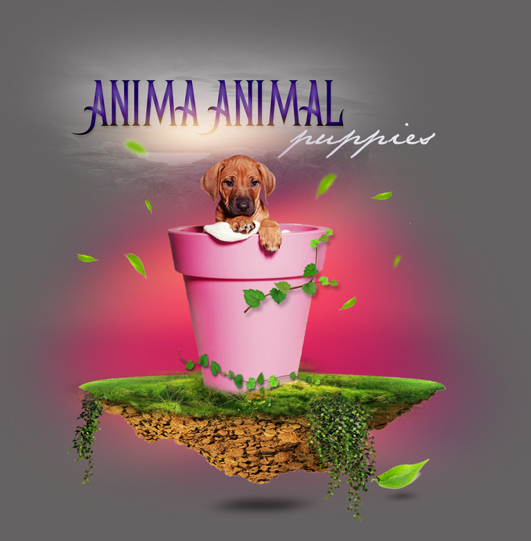 anima animal puppies